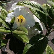 rhododendrun-mi-amor-6