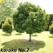 karaka-no-2